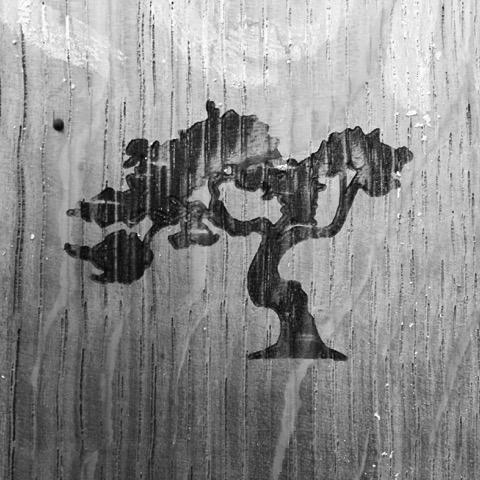 Moonah Tree
